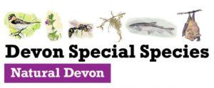 Devon special species logo