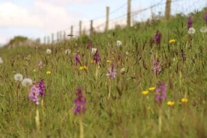 A picture of orchids in a road verge