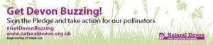 Get Devon Buzzing pollinator campaign