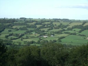 A landscape with lots of trees scattered across it
